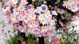 花は大好きなんだけれど、作り込んでいるのはねぇ