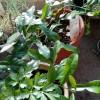 無事に冬を越して、新芽が開いてきた♪